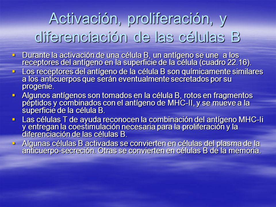 Activación, proliferación, y diferenciación de las células B