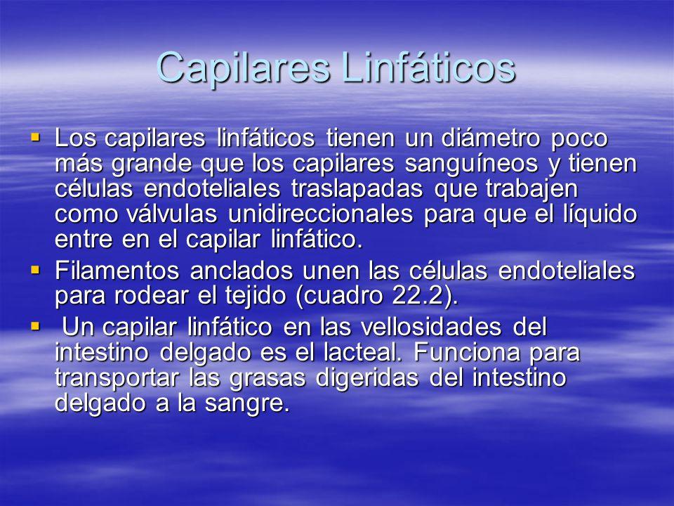 Capilares Linfáticos