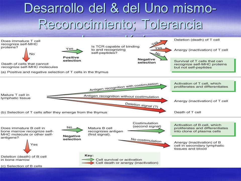 Desarrollo del & del Uno mismo-Reconocimiento; Tolerancia Inmunológica