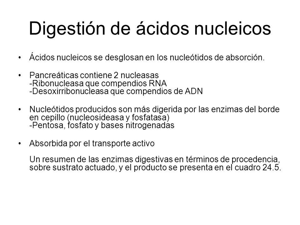 Digestión de ácidos nucleicos