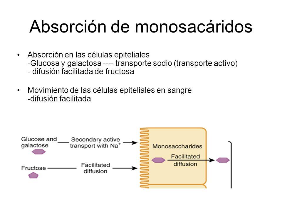 Absorción de monosacáridos