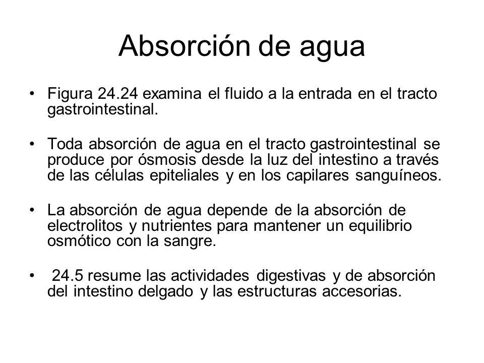 Absorción de agua Figura 24.24 examina el fluido a la entrada en el tracto gastrointestinal.