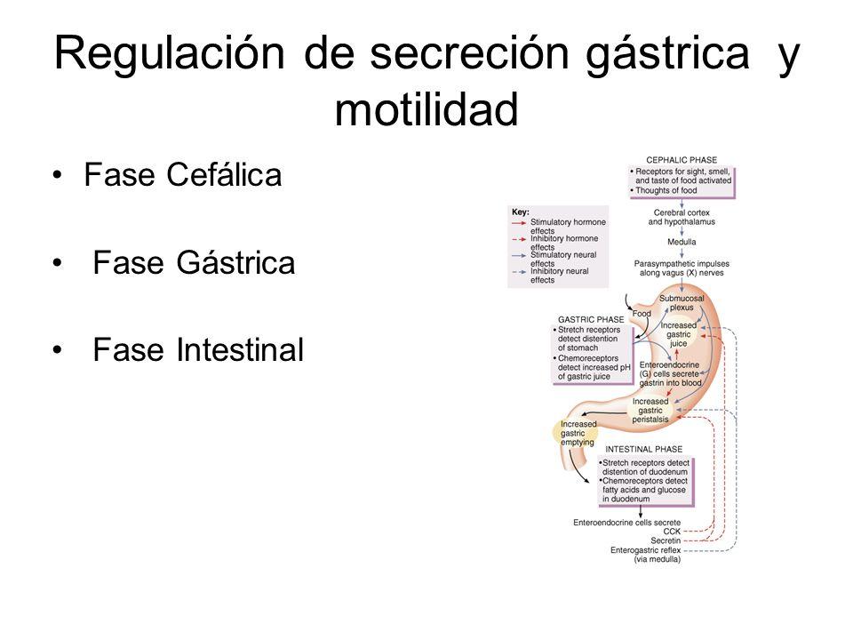 Regulación de secreción gástrica y motilidad