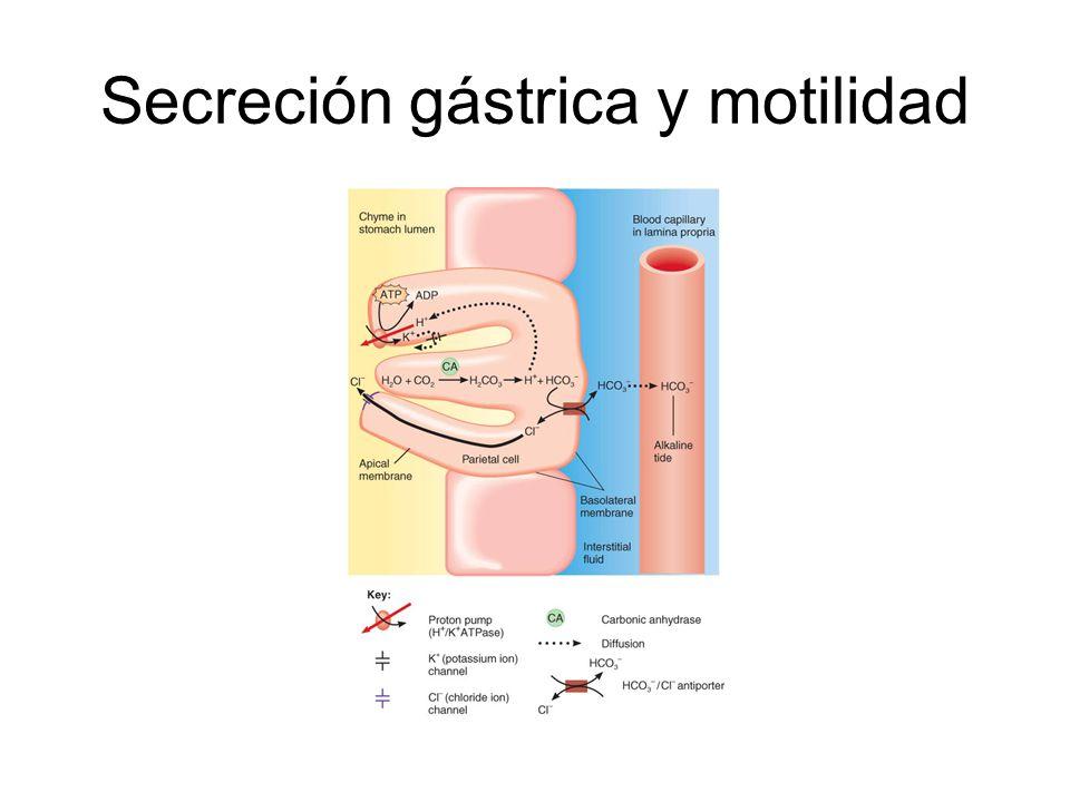 Secreción gástrica y motilidad