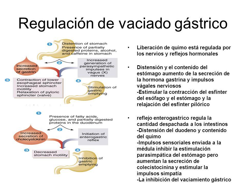 Regulación de vaciado gástrico