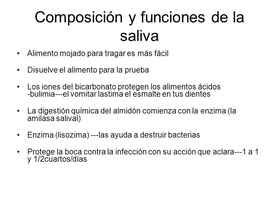 Composición y funciones de la saliva