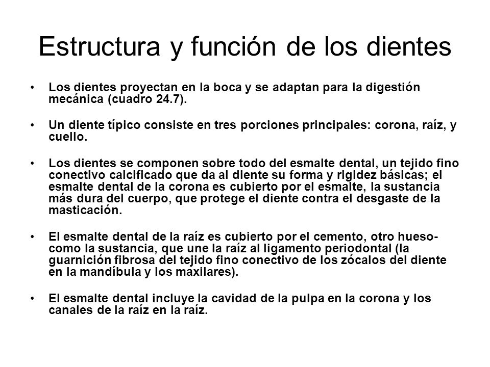 Estructura y función de los dientes