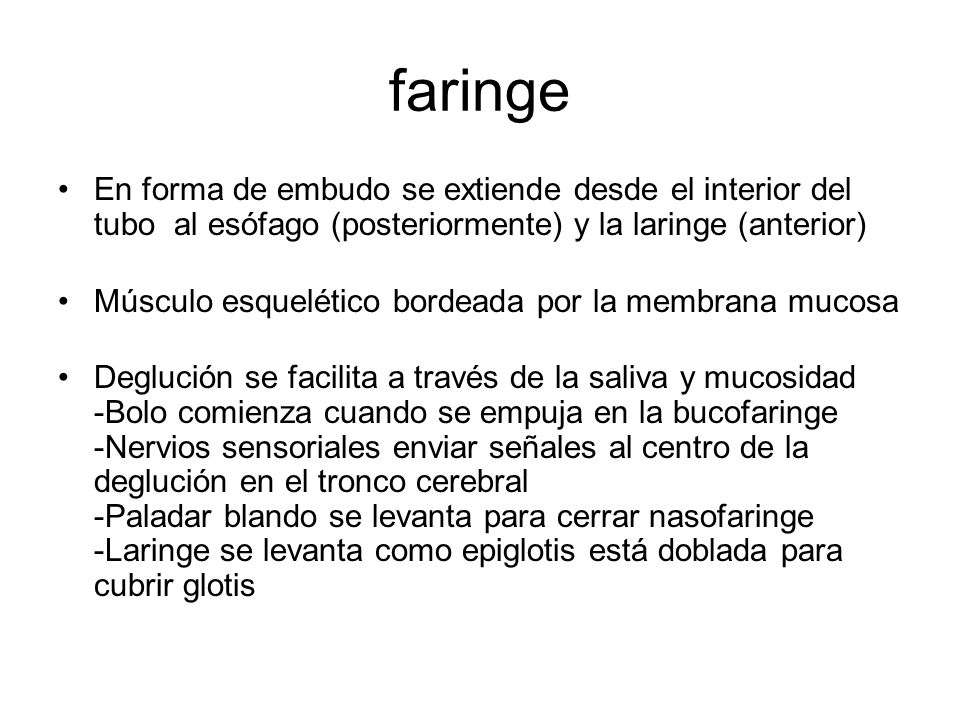 faringe En forma de embudo se extiende desde el interior del tubo al esófago (posteriormente) y la laringe (anterior)