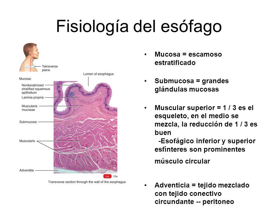 Fisiología del esófago