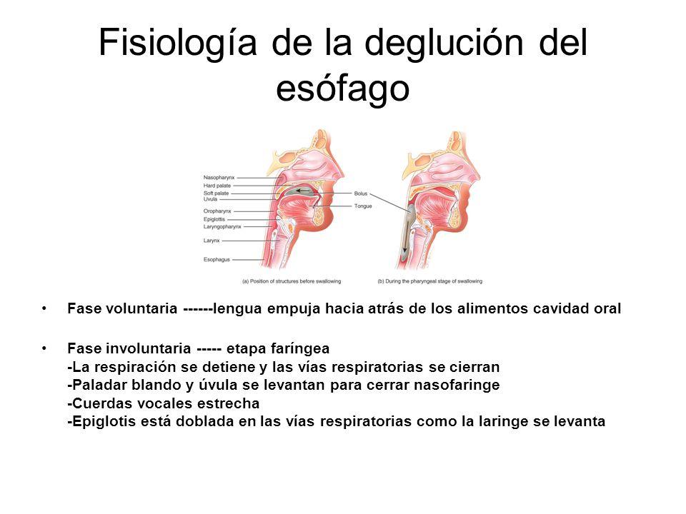 Fisiología de la deglución del esófago