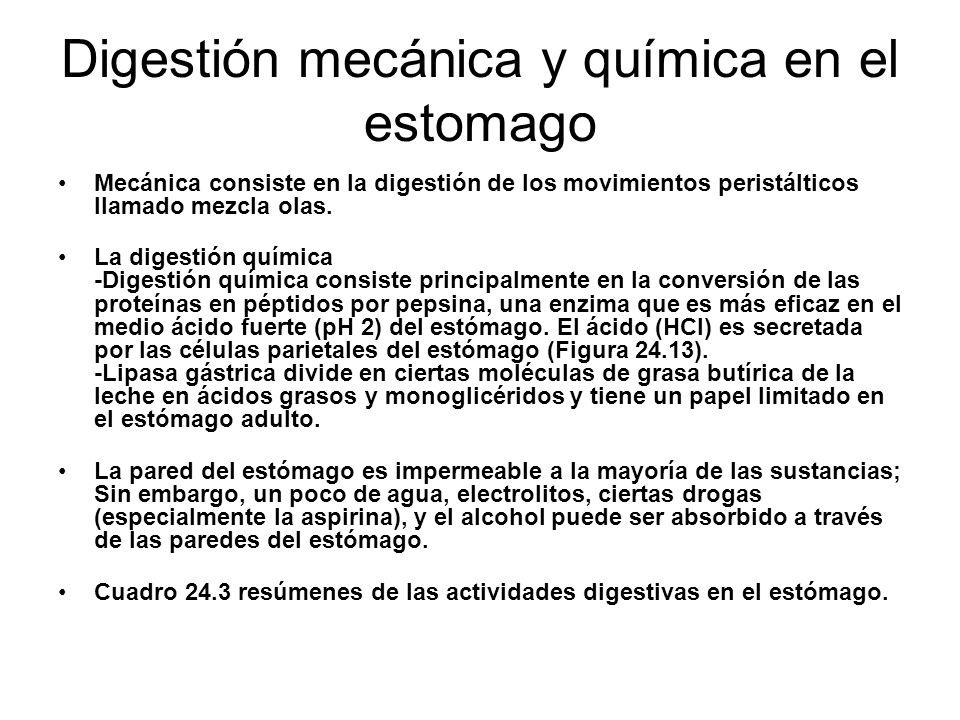 Digestión mecánica y química en el estomago