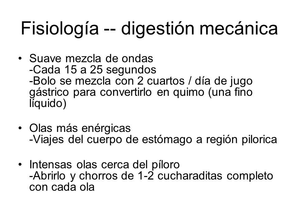 Fisiología -- digestión mecánica