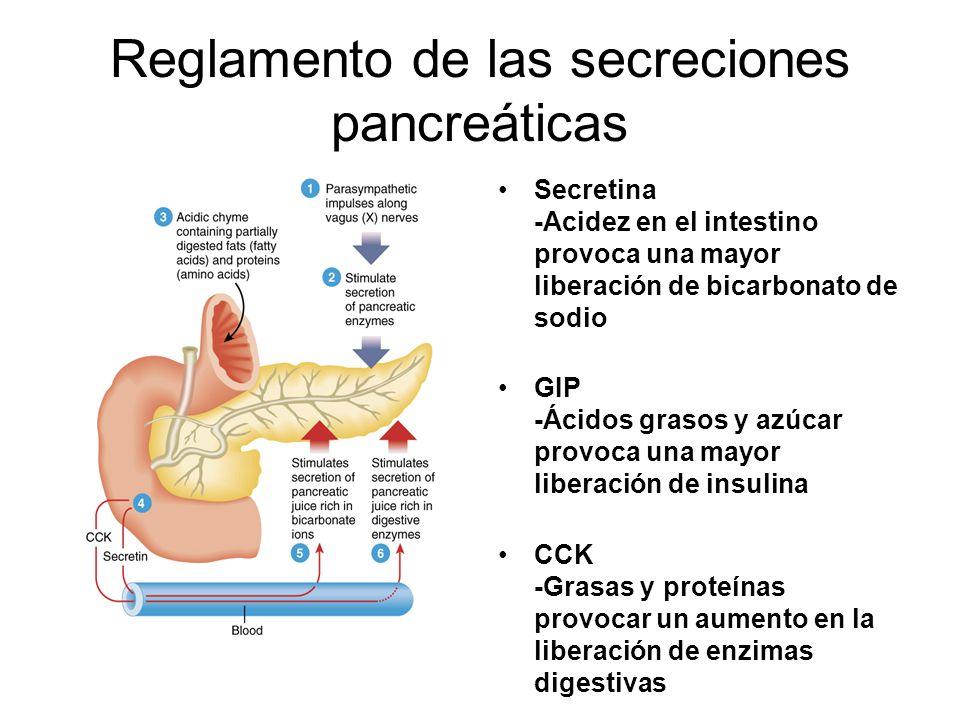 Reglamento de las secreciones pancreáticas