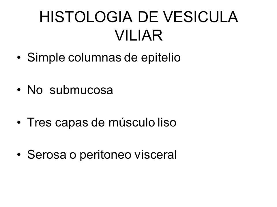 HISTOLOGIA DE VESICULA VILIAR