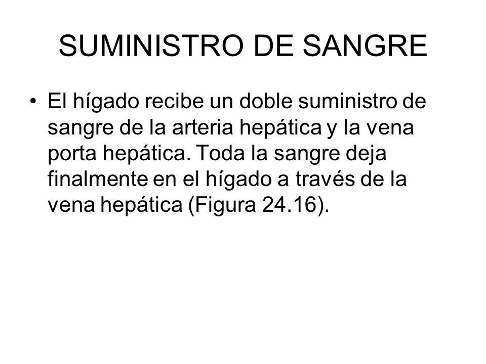 SUMINISTRO DE SANGRE