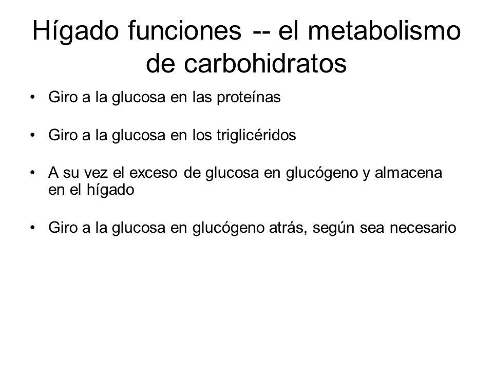 Hígado funciones -- el metabolismo de carbohidratos