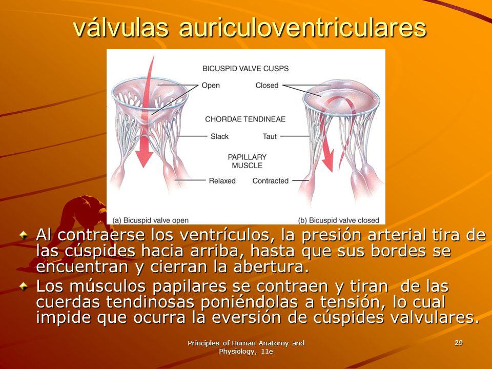 válvulas auriculoventriculares cerradas.