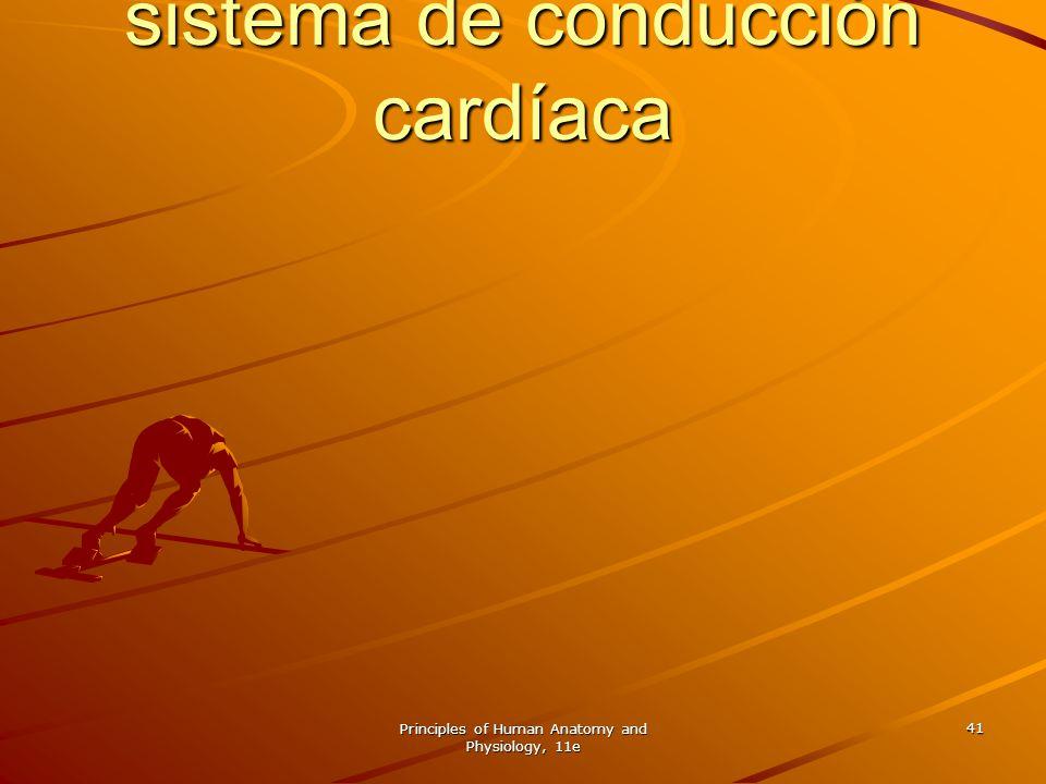 Músculo cardíaco y el sistema de conducción cardíaca
