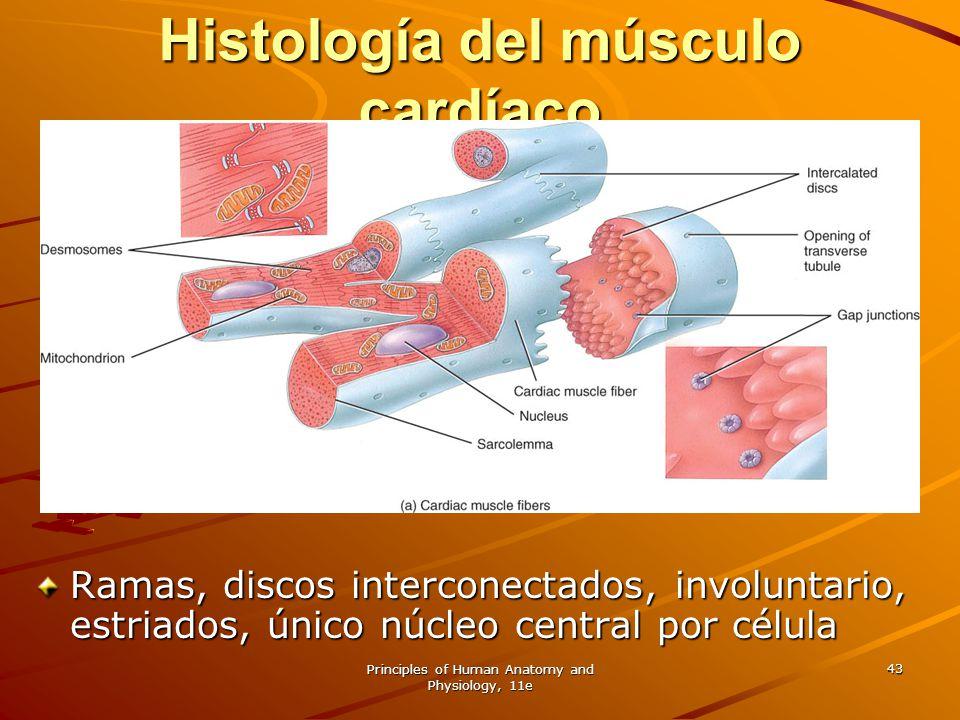 Histología del músculo cardíaco