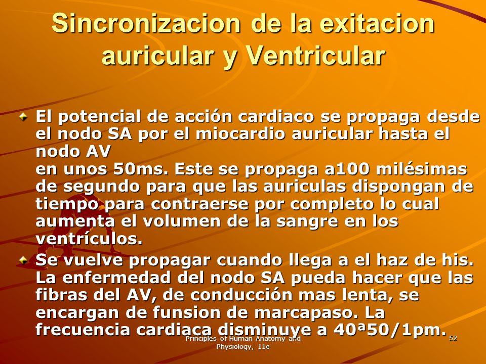 Sincronizacion de la exitacion auricular y Ventricular