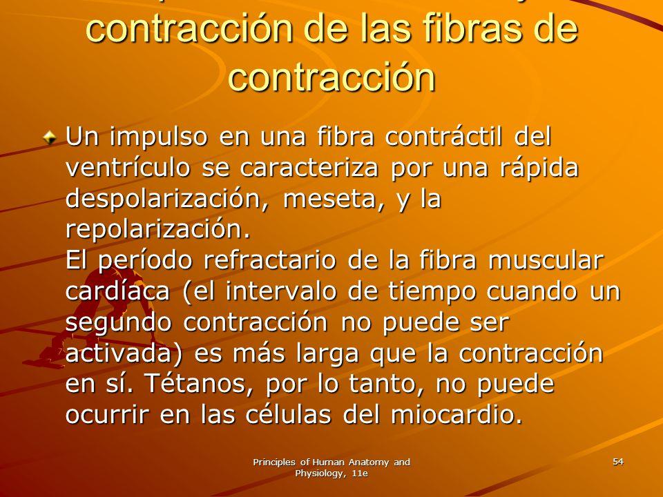 Del potencial de acción y la contracción de las fibras de contracción