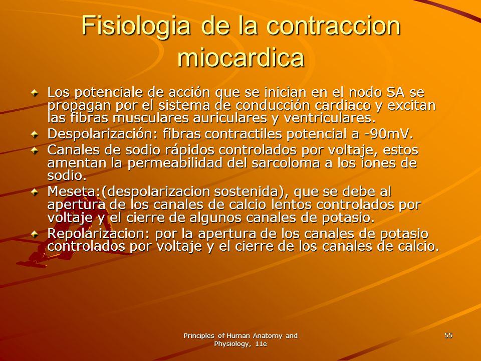 Fisiologia de la contraccion miocardica
