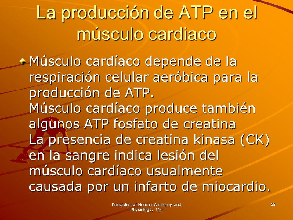 La producción de ATP en el músculo cardiaco