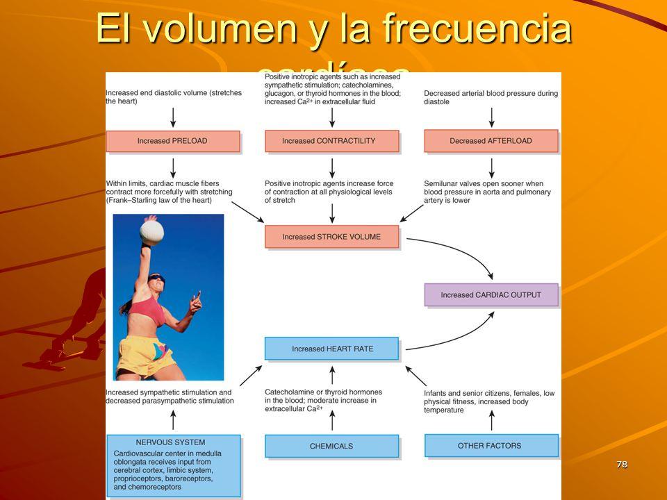 El volumen y la frecuencia cardíaca