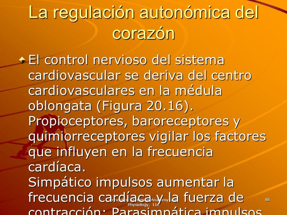 La regulación autonómica del corazón