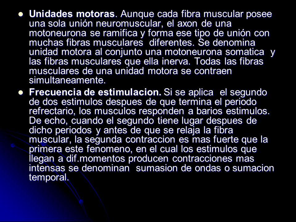 Unidades motoras. Aunque cada fibra muscular posee una sola unión neuromuscular, el axon de una motoneurona se ramifica y forma ese tipo de unión con muchas fibras musculares diferentes. Se denomina unidad motora al conjunto una motoneurona somatica y las fibras musculares que ella inerva. Todas las fibras musculares de una unidad motora se contraen simultaneamente.