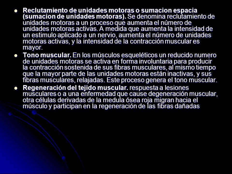Reclutamiento de unidades motoras o sumacion espacia (sumacion de unidades motoras). Se denomina reclutamiento de unidades motoras a un proceso que aumenta el número de unidades motoras activas. A medida que aumenta la intensidad de un estimulo aplicado a un nervio, aumenta el número de unidades motoras activas, y la intensidad de la contracción muscular es mayor.