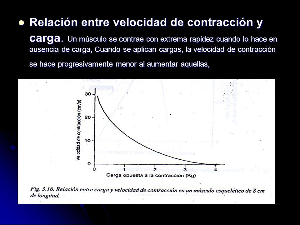 Relación entre velocidad de contracción y carga