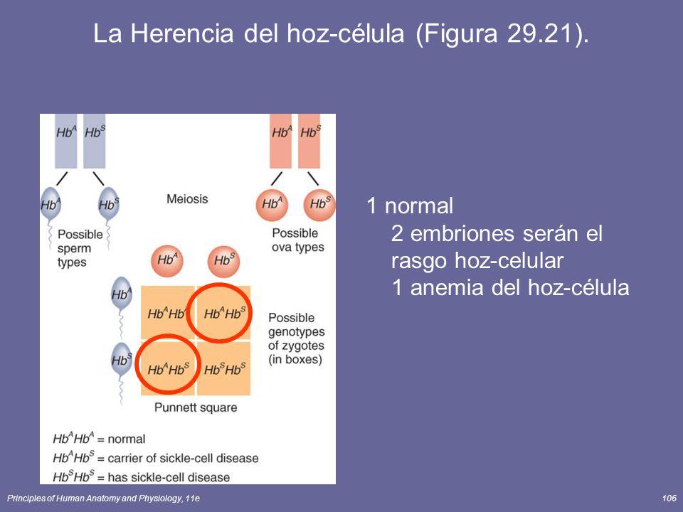 La Herencia del hoz-célula (Figura 29.21).