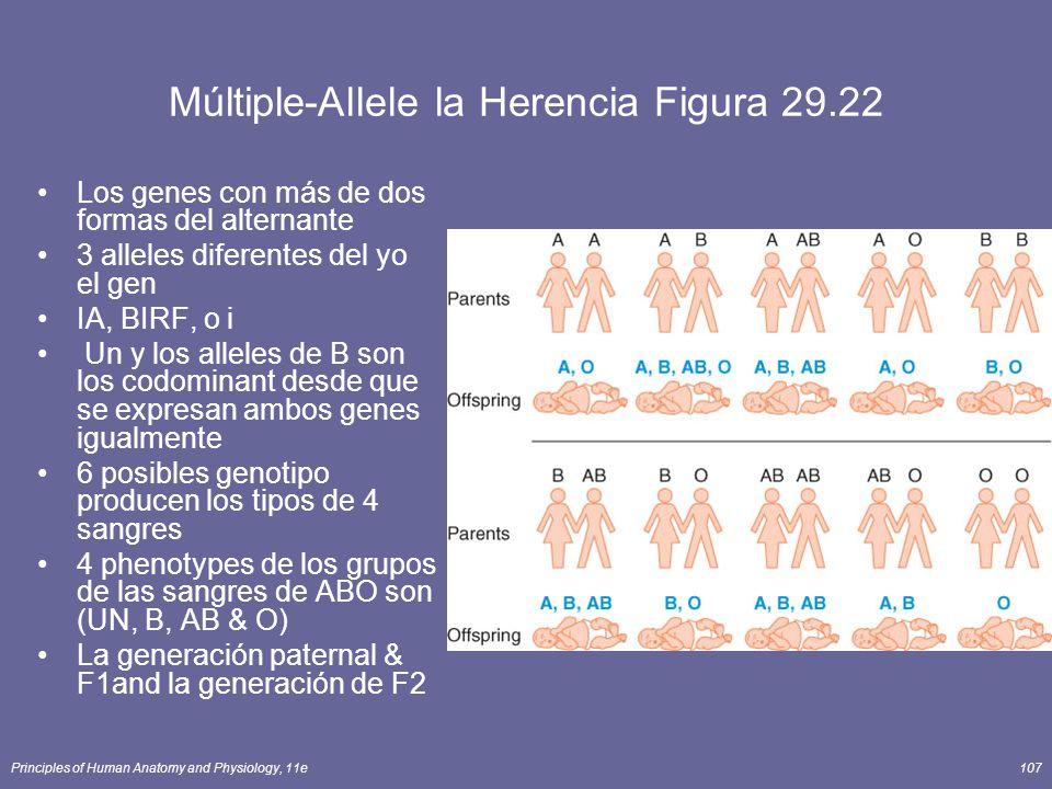 Múltiple-Allele la Herencia Figura 29.22