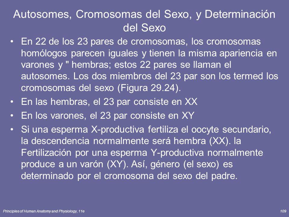 Autosomes, Cromosomas del Sexo, y Determinación del Sexo