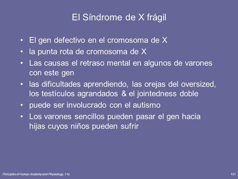 El Síndrome de X frágil El gen defectivo en el cromosoma de X