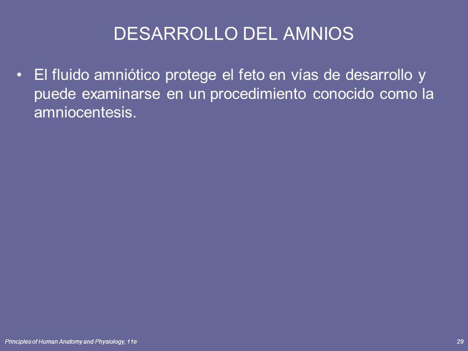 DESARROLLO DEL AMNIOS