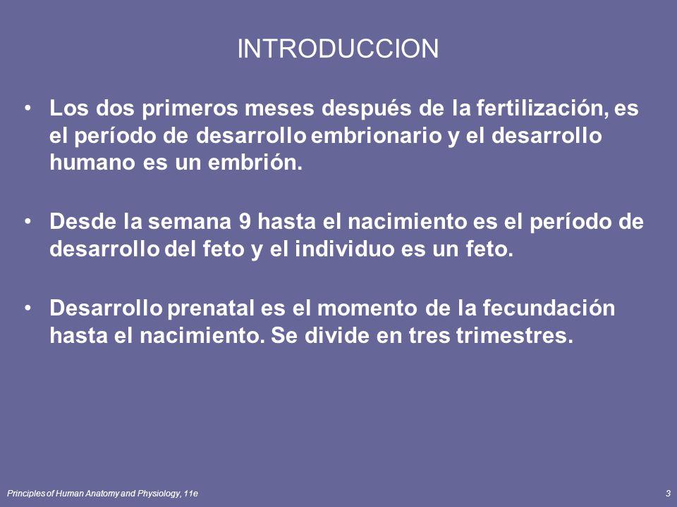 INTRODUCCION Los dos primeros meses después de la fertilización, es el período de desarrollo embrionario y el desarrollo humano es un embrión.