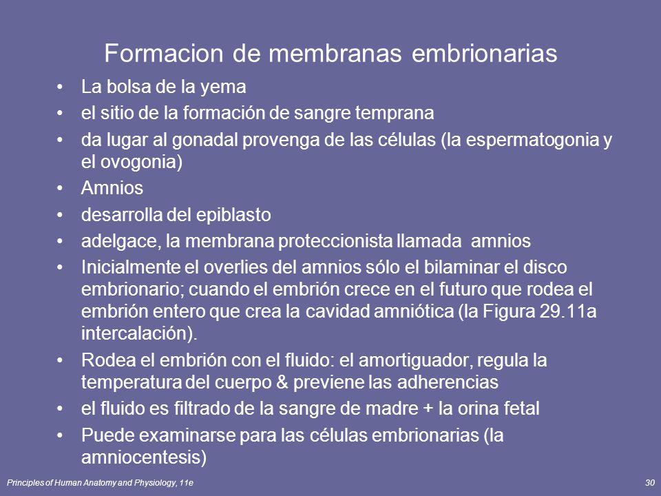 Formacion de membranas embrionarias