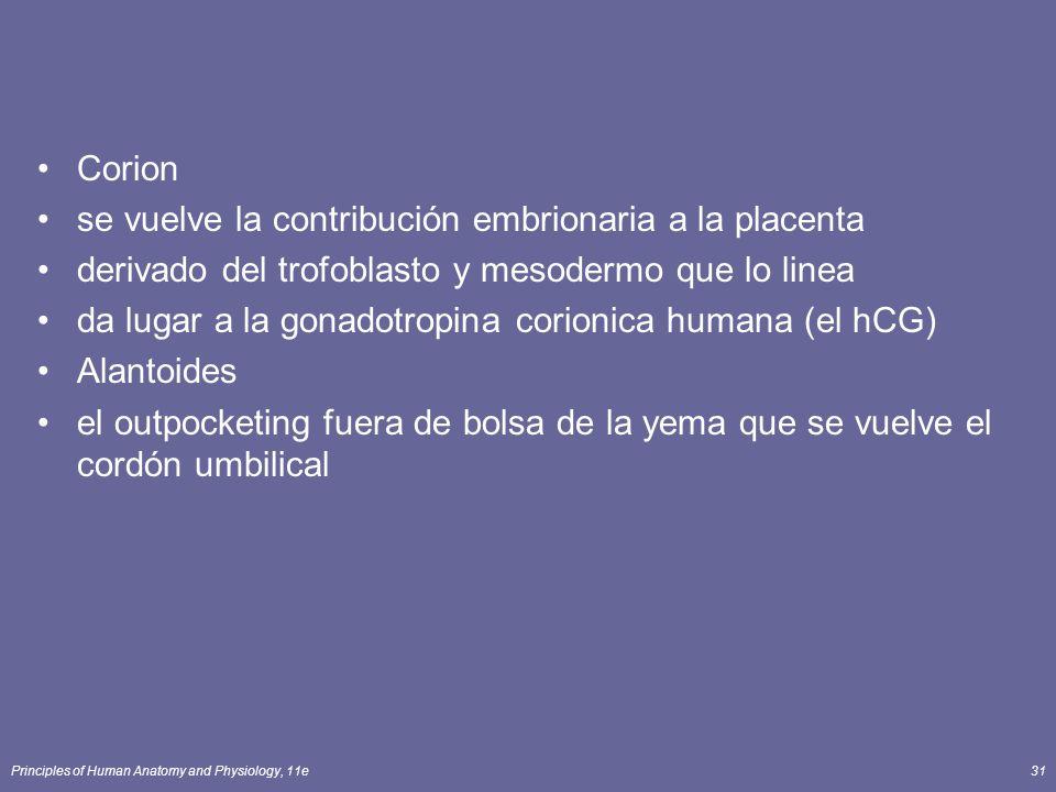 se vuelve la contribución embrionaria a la placenta