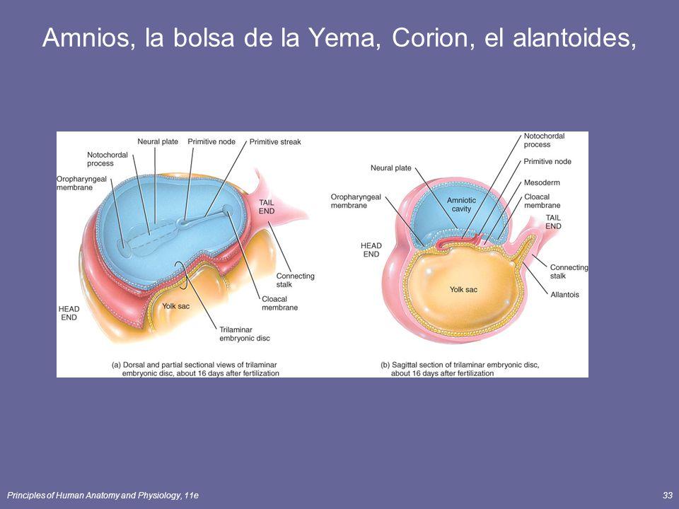 Amnios, la bolsa de la Yema, Corion, el alantoides,