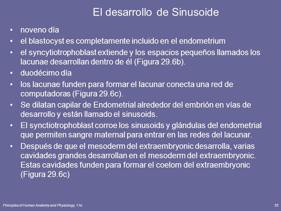 El desarrollo de Sinusoide
