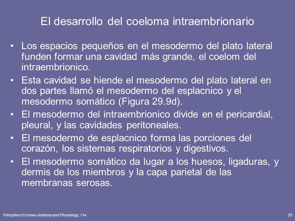 El desarrollo del coeloma intraembrionario