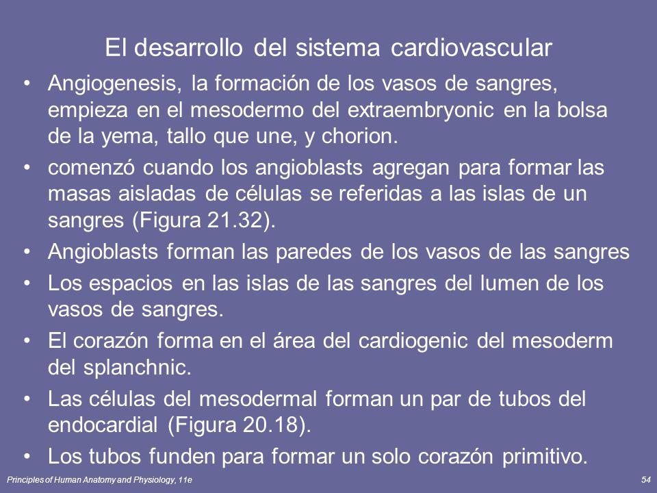 El desarrollo del sistema cardiovascular