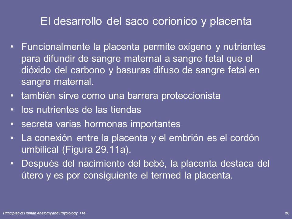 El desarrollo del saco corionico y placenta