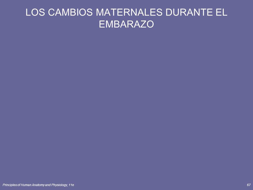 LOS CAMBIOS MATERNALES DURANTE EL EMBARAZO