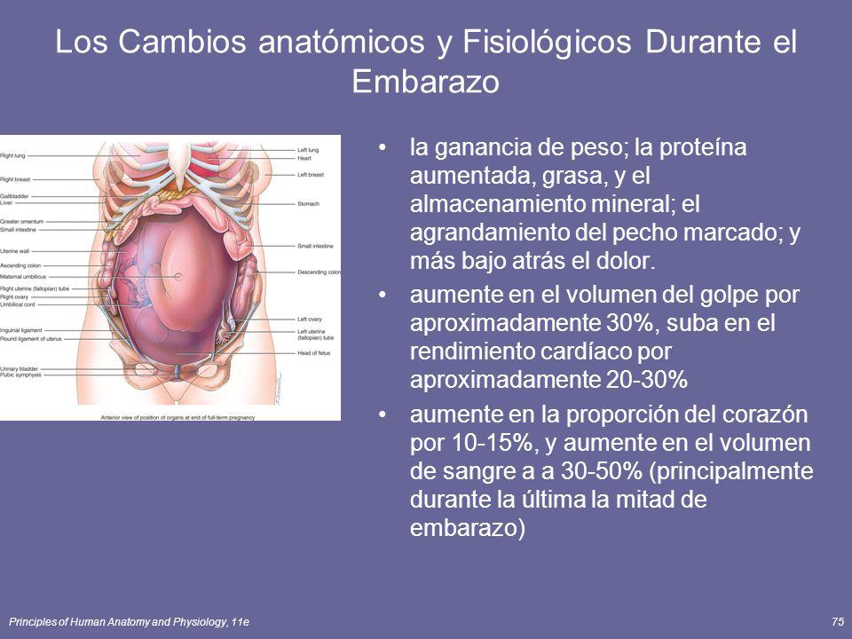 Los Cambios anatómicos y Fisiológicos Durante el Embarazo