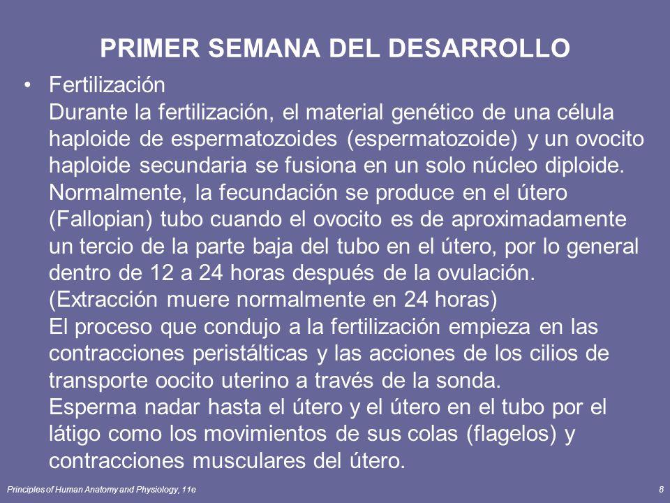 PRIMER SEMANA DEL DESARROLLO