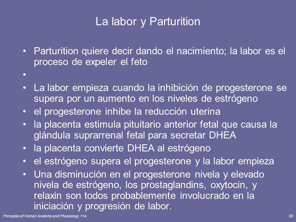 La labor y Parturition Parturition quiere decir dando el nacimiento; la labor es el proceso de expeler el feto.