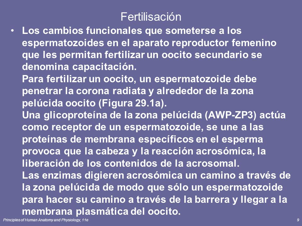 Fertilisación